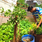 Here are tips to grow vegetables at home from Rajasthan's medical officer who dedicated his 2,000 sq ft terrace to grow home-made food