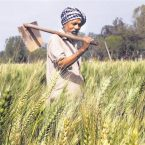 Punjab government to accept fresh applications from farmers under SSBY till July 24