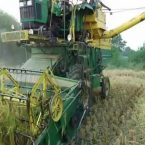 Ban on wheat harvesting with combinesfrom7pm to9amin Jalandhar district